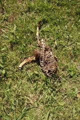 Skeleton emerging
