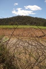 Blackberries and drying dam